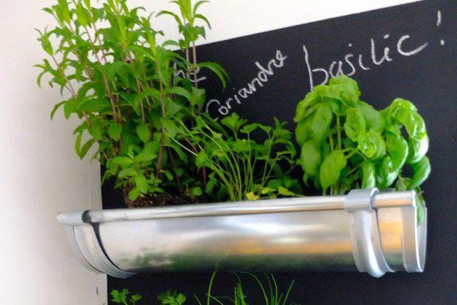 hierbas-para-plantar-en-la-cocina-1